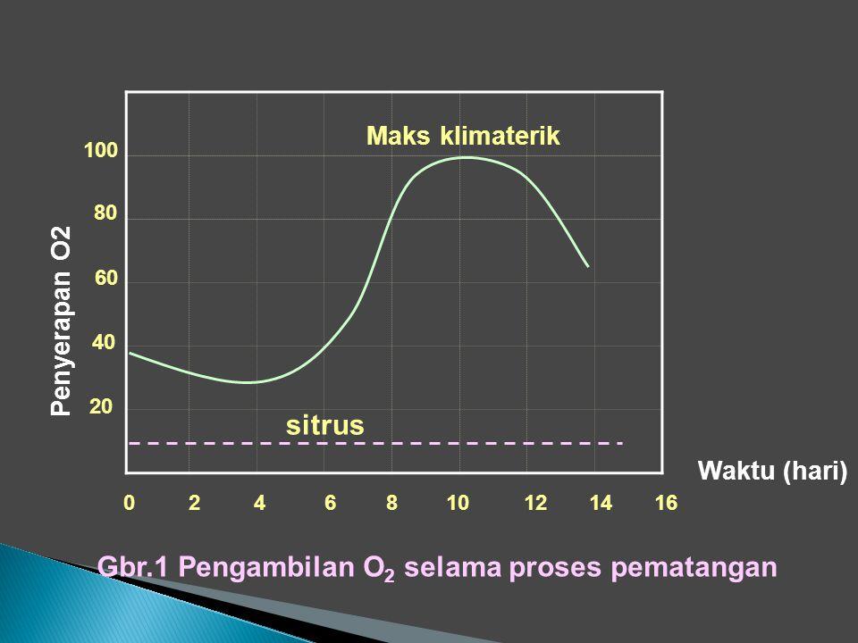 Gbr.1 Pengambilan O2 selama proses pematangan