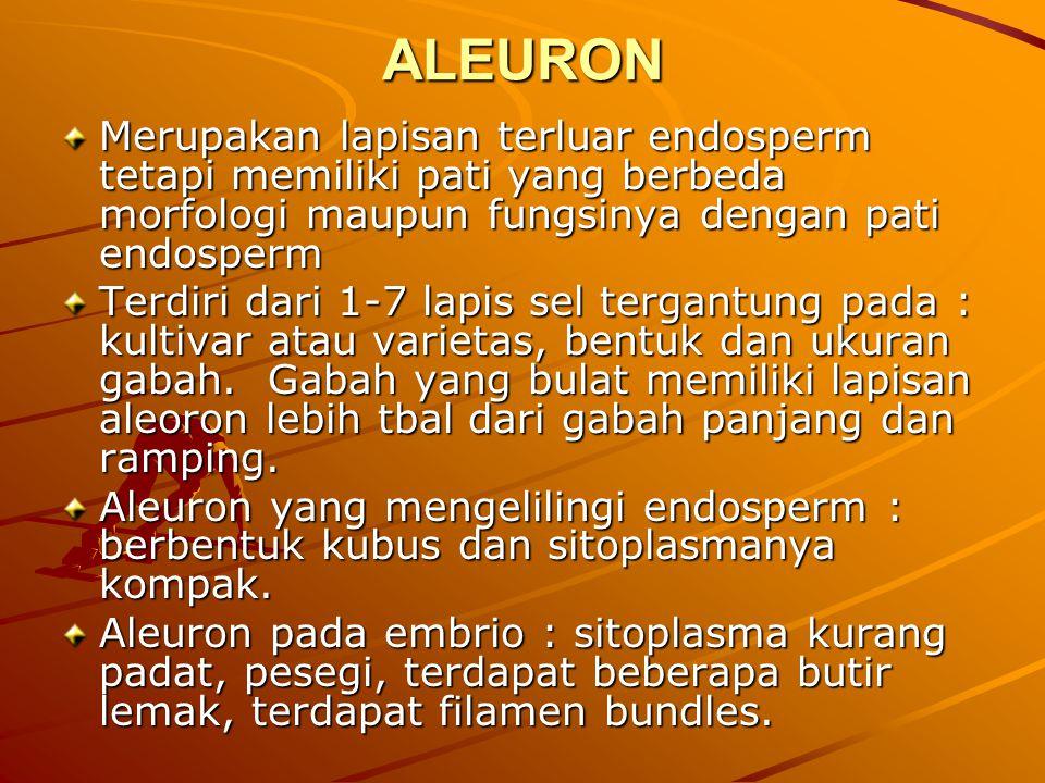 ALEURON Merupakan lapisan terluar endosperm tetapi memiliki pati yang berbeda morfologi maupun fungsinya dengan pati endosperm.