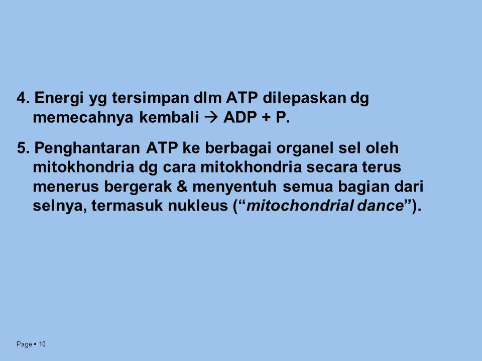4. Energi yg tersimpan dlm ATP dilepaskan dg memecahnya kembali  ADP + P.