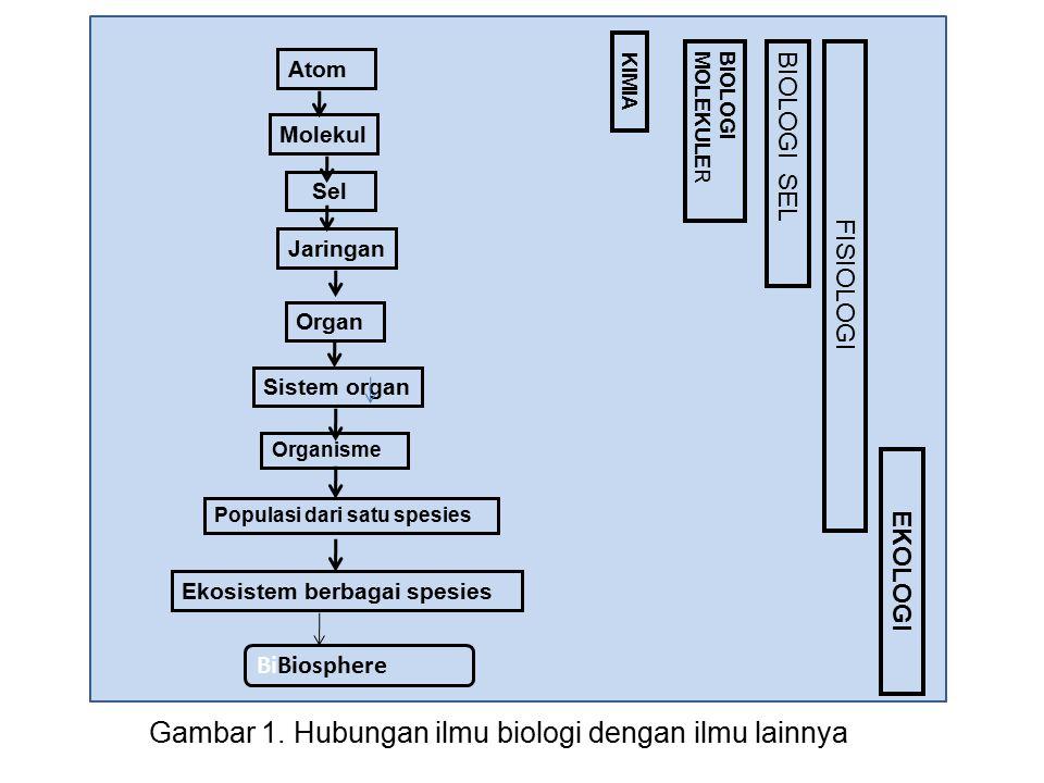 Gambar 1. Hubungan ilmu biologi dengan ilmu lainnya