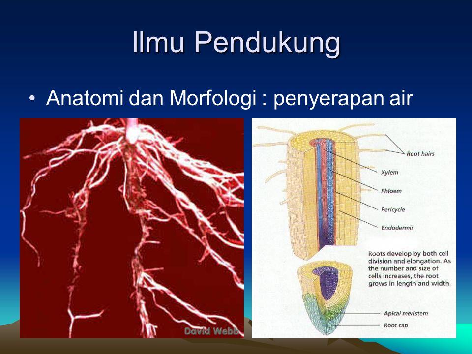 Ilmu Pendukung Anatomi dan Morfologi : penyerapan air