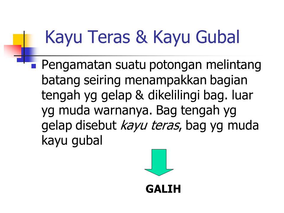 Kayu Teras & Kayu Gubal