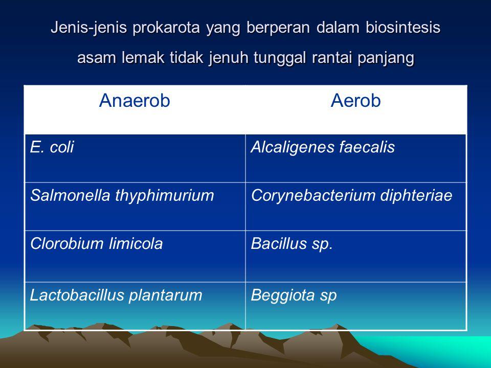 Kofaktor. +. Apoenzim  holoenzim non protein. Protein