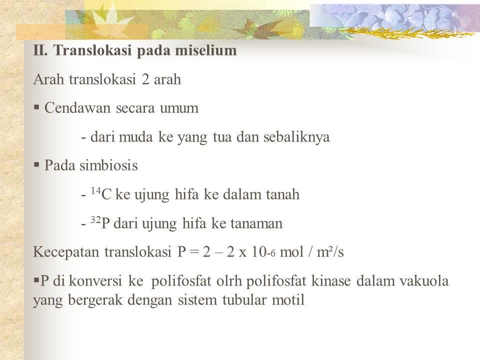 II. Translokasi pada miselium