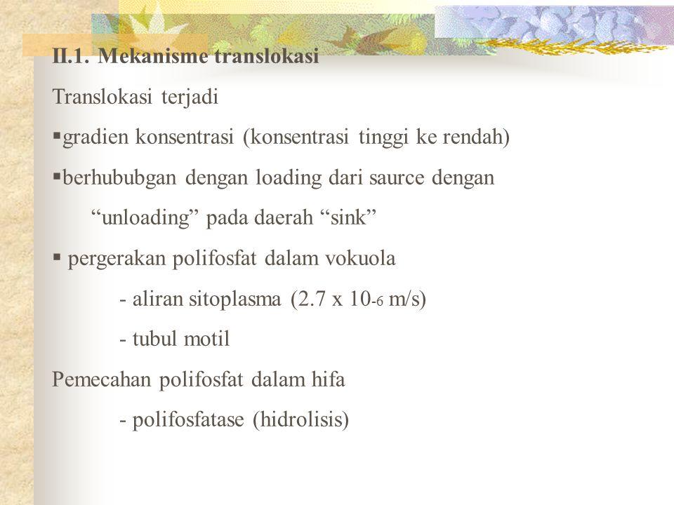II.1. Mekanisme translokasi