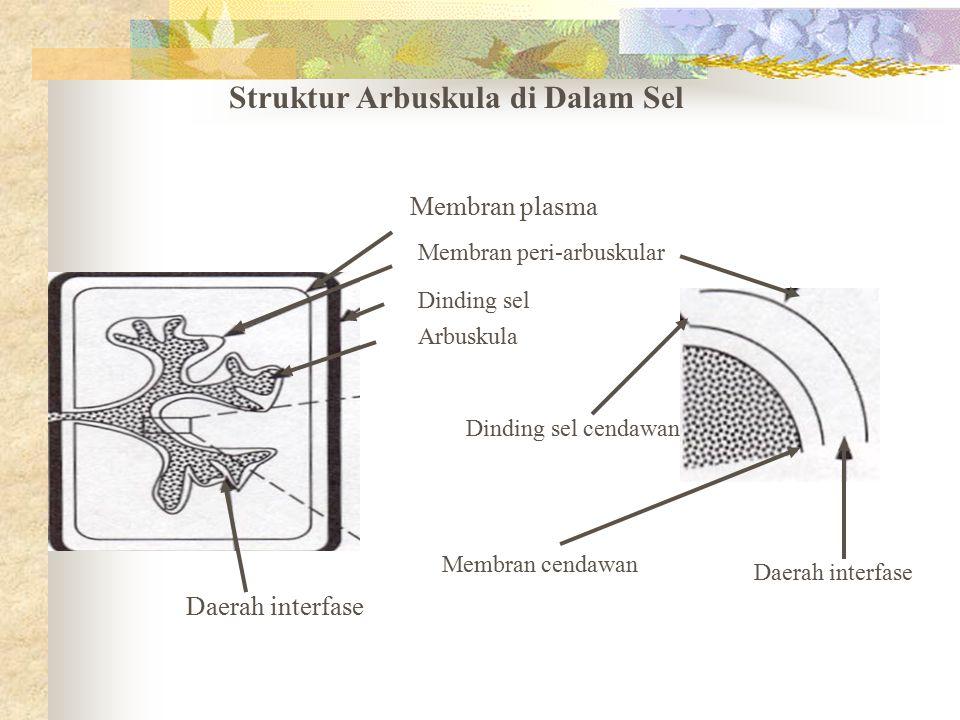 Struktur Arbuskula di Dalam Sel