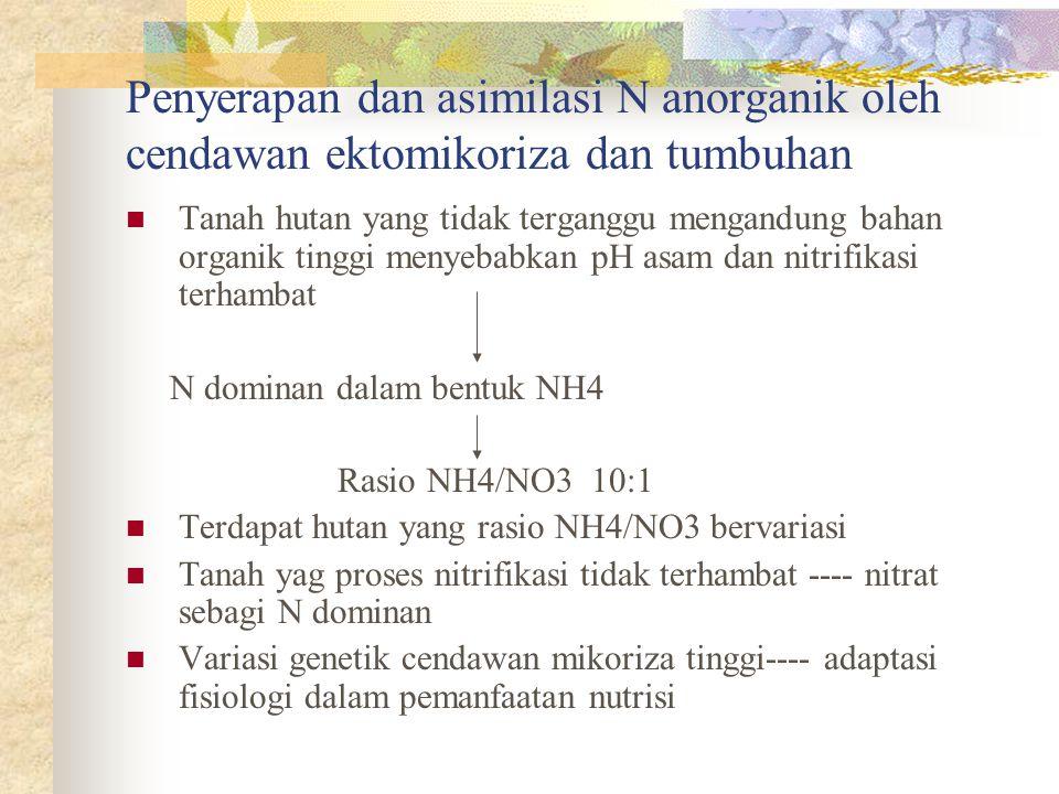 Penyerapan dan asimilasi N anorganik oleh cendawan ektomikoriza dan tumbuhan