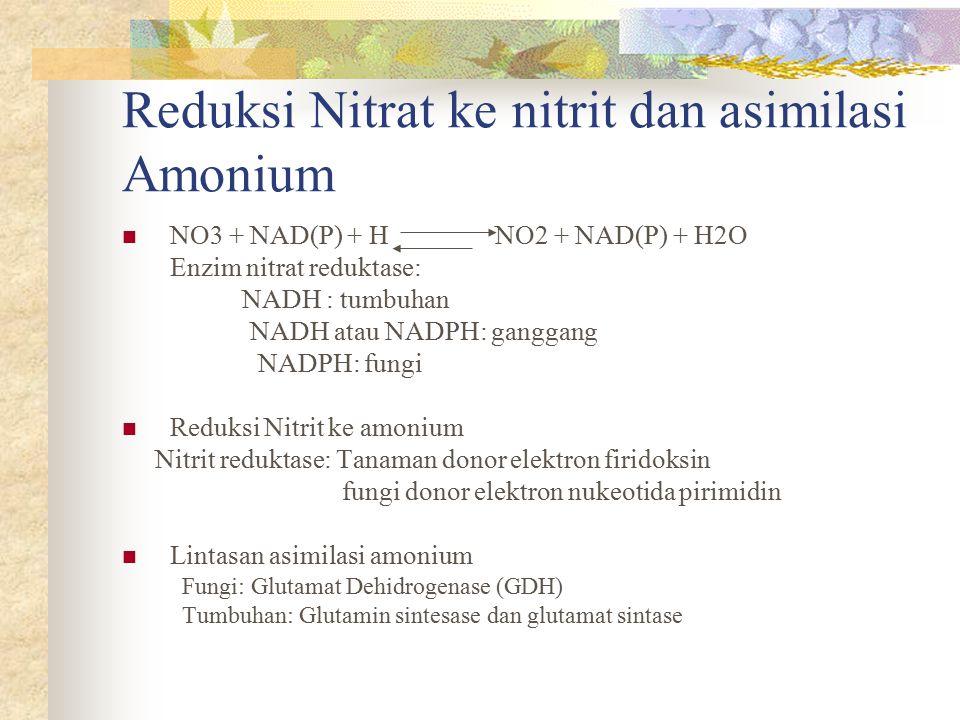 Reduksi Nitrat ke nitrit dan asimilasi Amonium