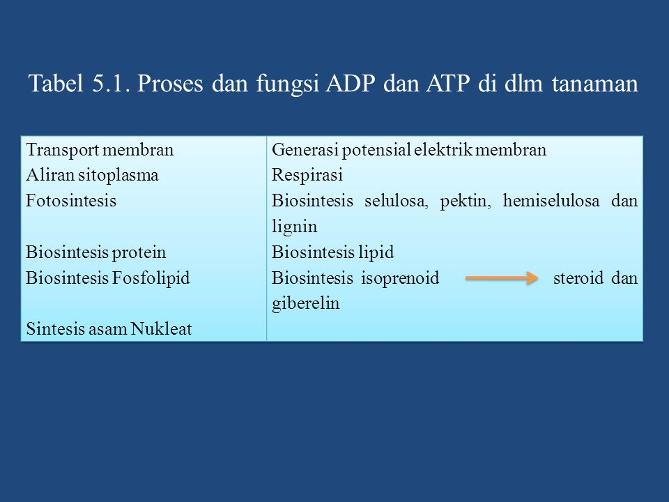 Tabel 5.1. Proses dan fungsi ADP dan ATP di dlm tanaman