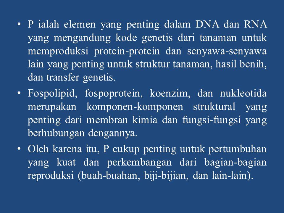 P ialah elemen yang penting dalam DNA dan RNA yang mengandung kode genetis dari tanaman untuk memproduksi protein-protein dan senyawa-senyawa lain yang penting untuk struktur tanaman, hasil benih, dan transfer genetis.