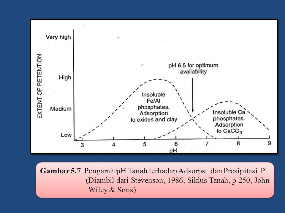 Gambar 5.7 Pengaruh pH Tanah terhadap Adsorpsi dan Presipitasi P