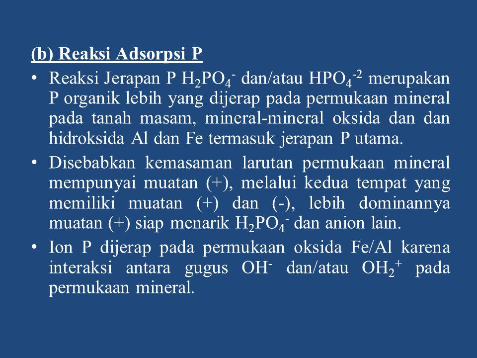 (b) Reaksi Adsorpsi P