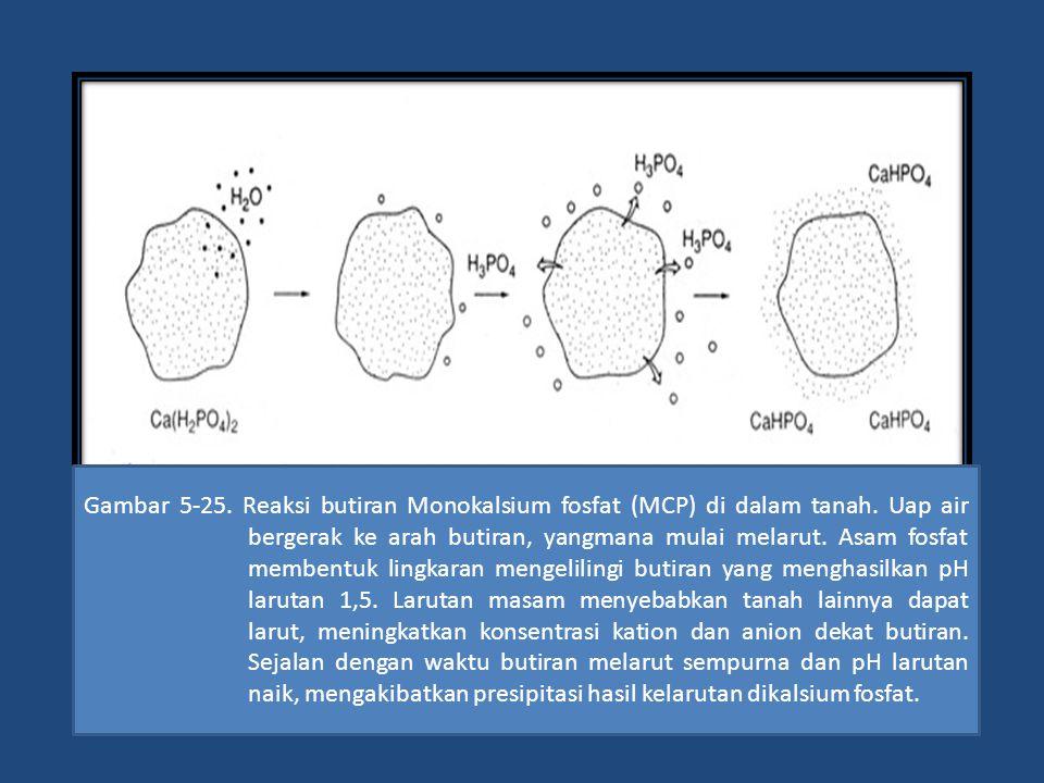 Gambar 5-25. Reaksi butiran Monokalsium fosfat (MCP) di dalam tanah