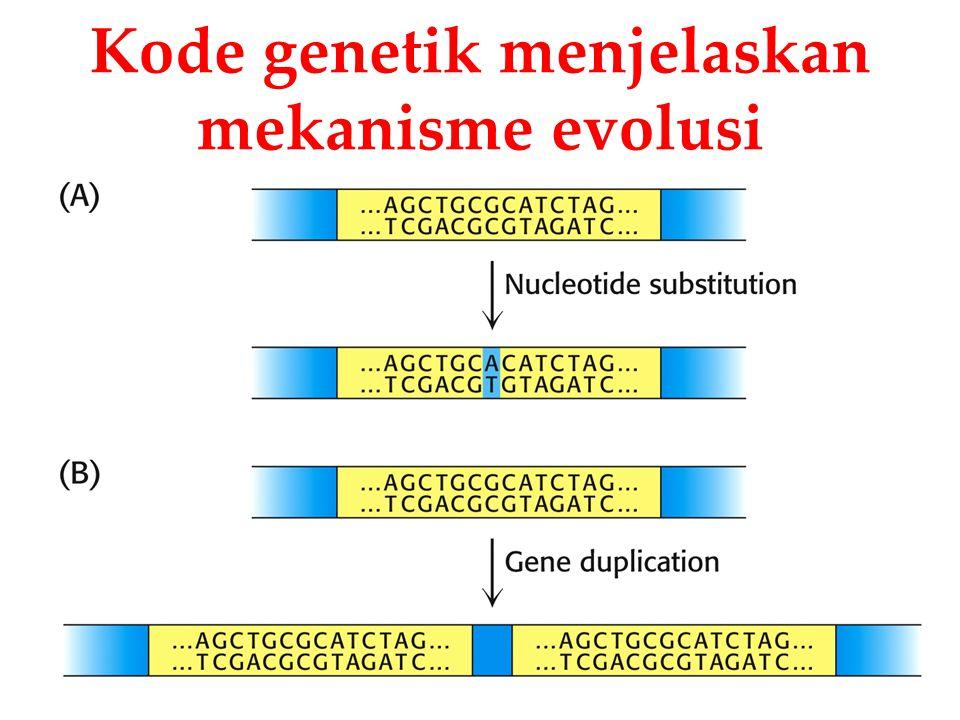 Kode genetik menjelaskan mekanisme evolusi