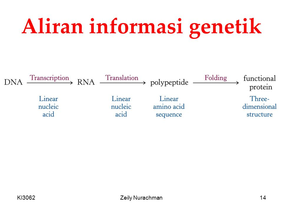 Aliran informasi genetik