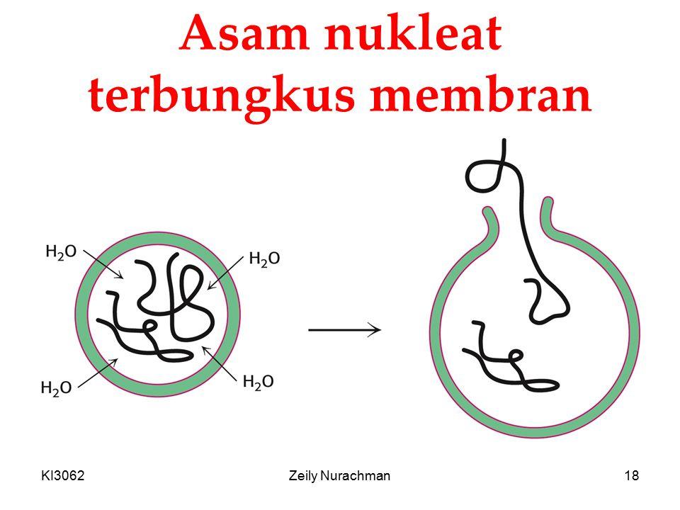 Asam nukleat terbungkus membran