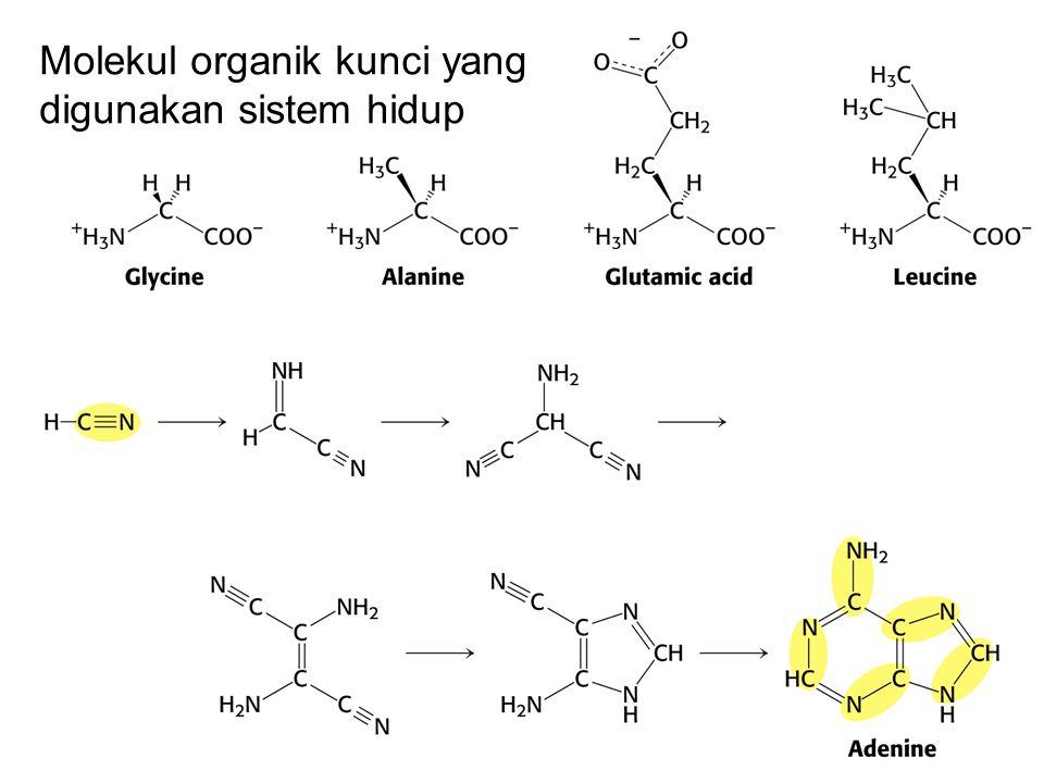 Molekul organik kunci yang digunakan sistem hidup