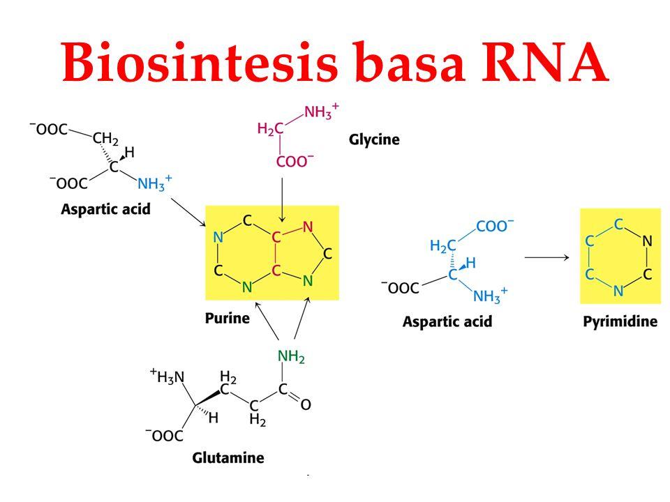 Biosintesis basa RNA KI3062 Zeily Nurachman