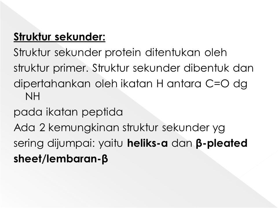 Struktur sekunder: Struktur sekunder protein ditentukan oleh struktur primer.