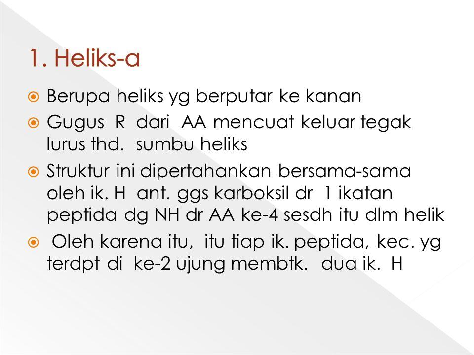 1. Heliks-α Berupa heliks yg berputar ke kanan