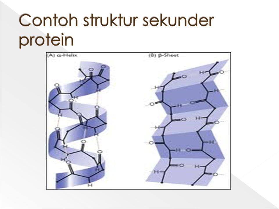Contoh struktur sekunder protein