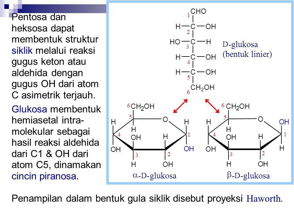 Penampilan dalam bentuk gula siklik disebut proyeksi Haworth.