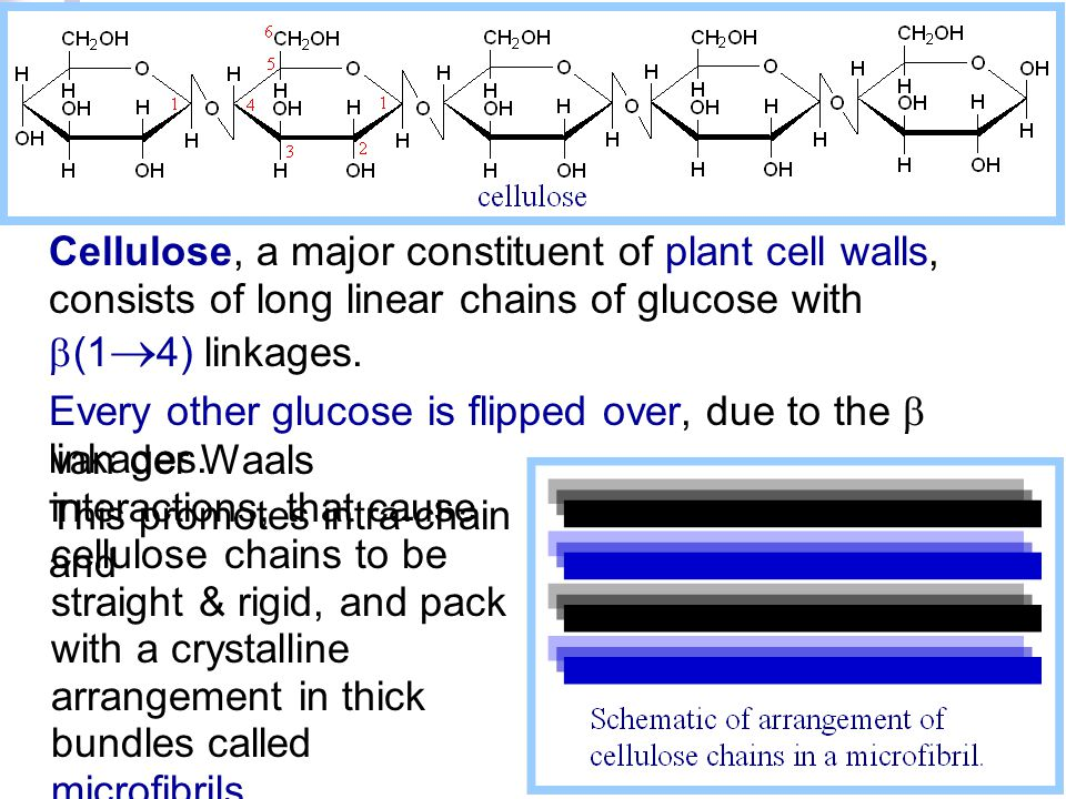 Cellulose, a major constituent of plant cell walls, consists of long linear chains of glucose with b(1®4) linkages.