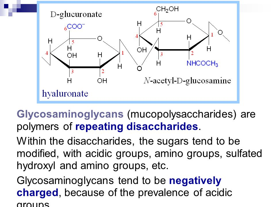 Glycosaminoglycans (mucopolysaccharides) are polymers of repeating disaccharides.