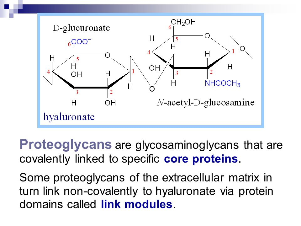 Proteoglycans are glycosaminoglycans that are covalently linked to specific core proteins.
