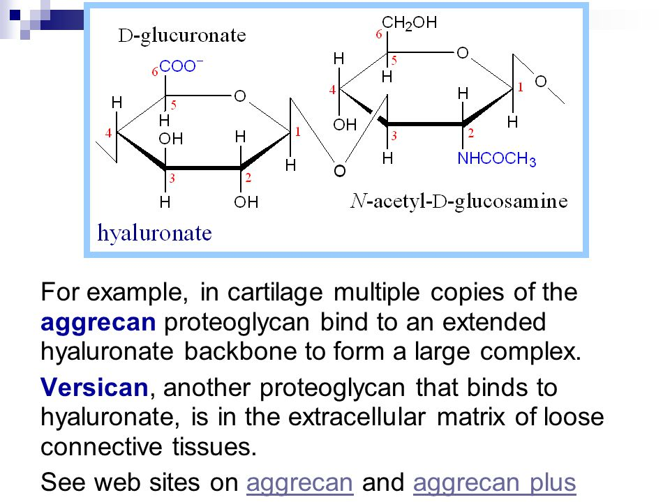 For example, in cartilage multiple copies of the aggrecan proteoglycan bind to an extended hyaluronate backbone to form a large complex.