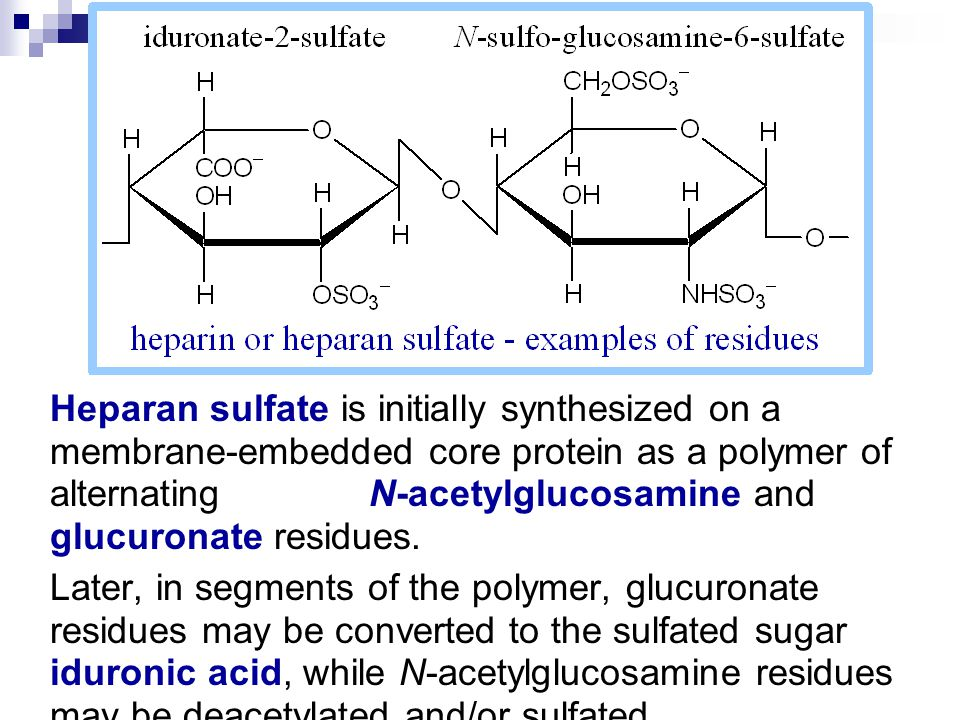 Heparan sulfate is initially synthesized on a membrane-embedded core protein as a polymer of alternating N-acetylglucosamine and glucuronate residues.