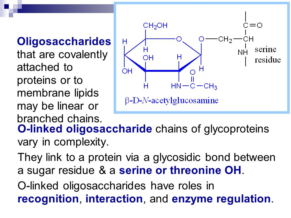 Oligosaccharides that are covalently attached to proteins or to membrane lipids may be linear or branched chains.