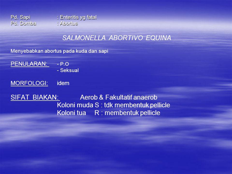 SALMONELLA ABORTIVO EQUINA