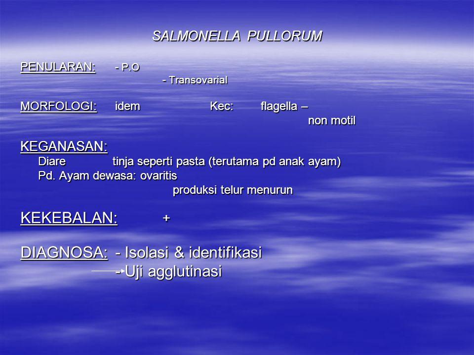 DIAGNOSA: - Isolasi & identifikasi - Uji agglutinasi