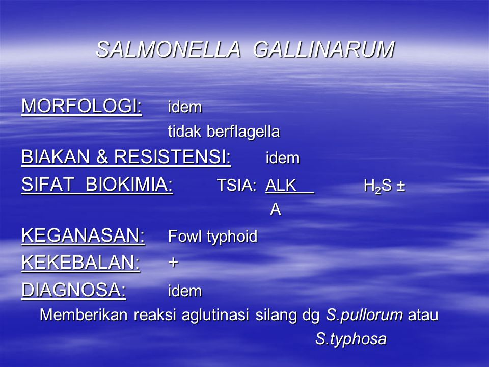 SALMONELLA GALLINARUM