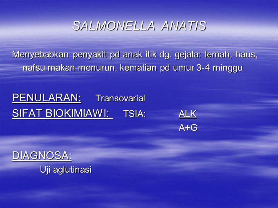 SALMONELLA ANATIS PENULARAN: Transovarial SIFAT BIOKIMIAWI: TSIA: ALK