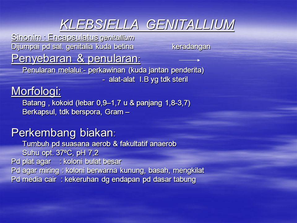 KLEBSIELLA GENITALLIUM