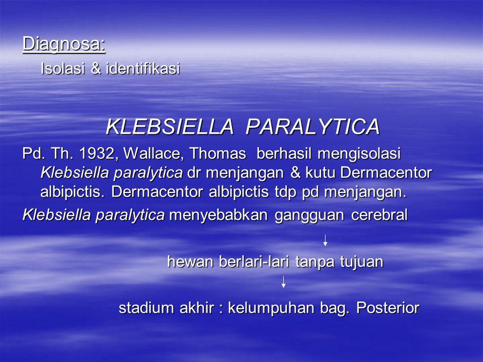 KLEBSIELLA PARALYTICA
