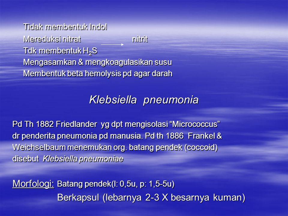Tidak membentuk Indol Klebsiella pneumonia