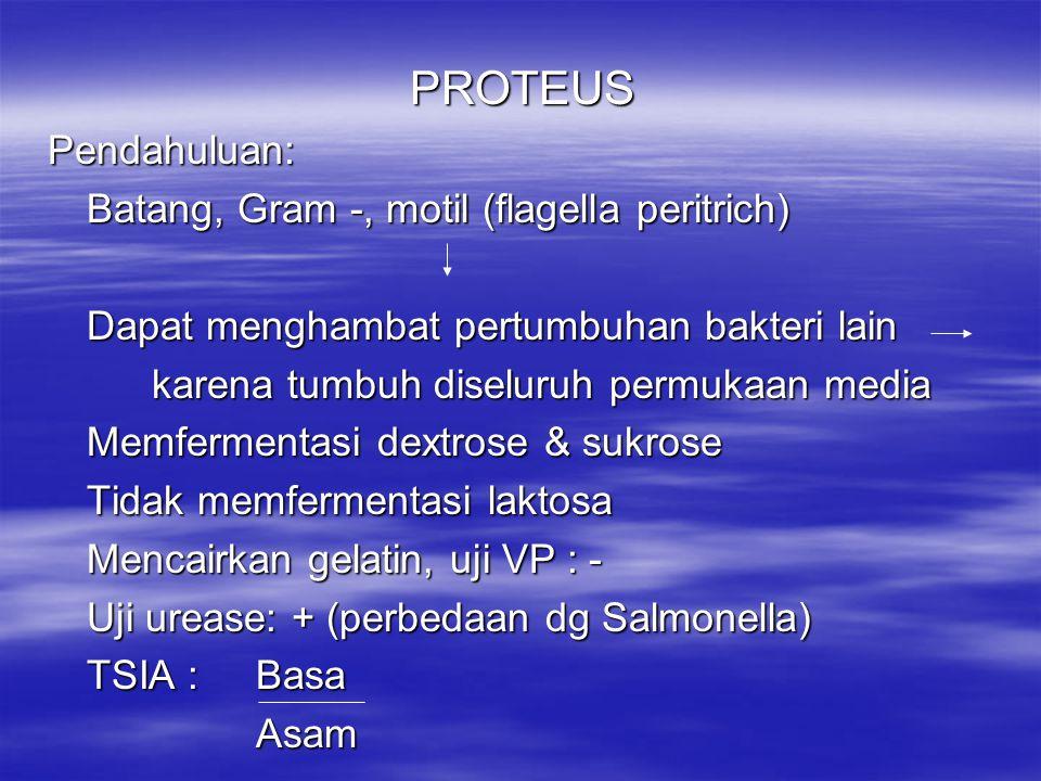 PROTEUS Pendahuluan: Batang, Gram -, motil (flagella peritrich)