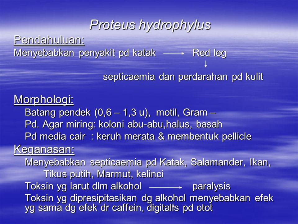 Proteus hydrophylus Pendahuluan: Morphologi: Keganasan: