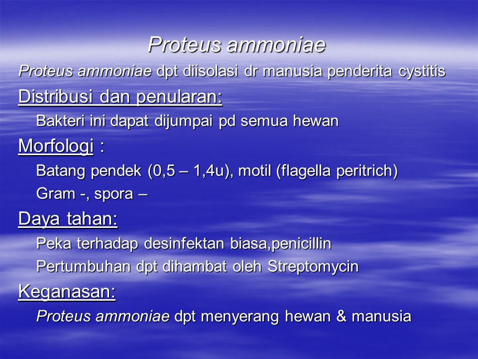 Proteus ammoniae Distribusi dan penularan: Morfologi : Daya tahan:
