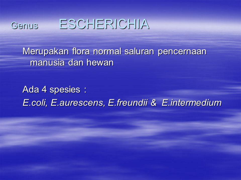 Genus ESCHERICHIA Merupakan flora normal saluran pencernaan manusia dan hewan.