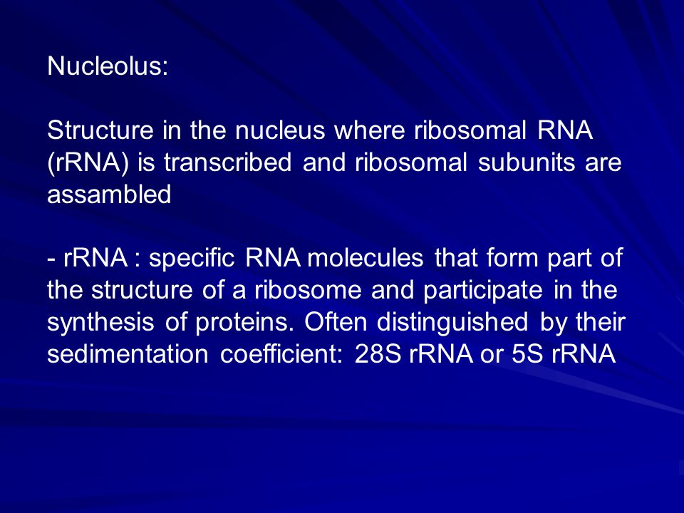 Nucleolus: Structure in the nucleus where ribosomal RNA (rRNA) is transcribed and ribosomal subunits are assambled.