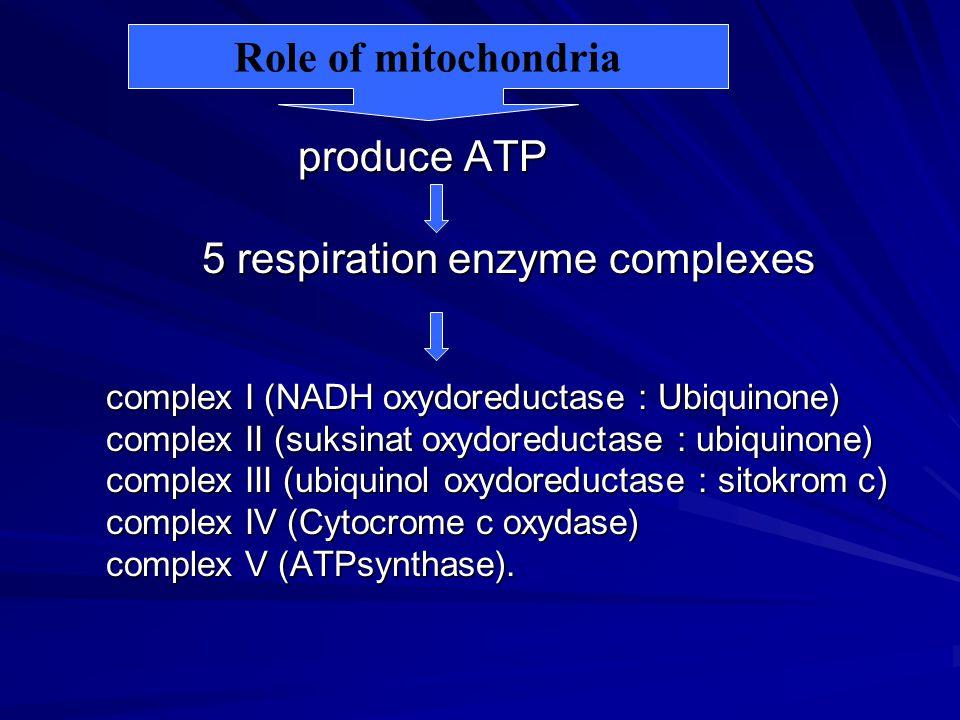 5 respiration enzyme complexes