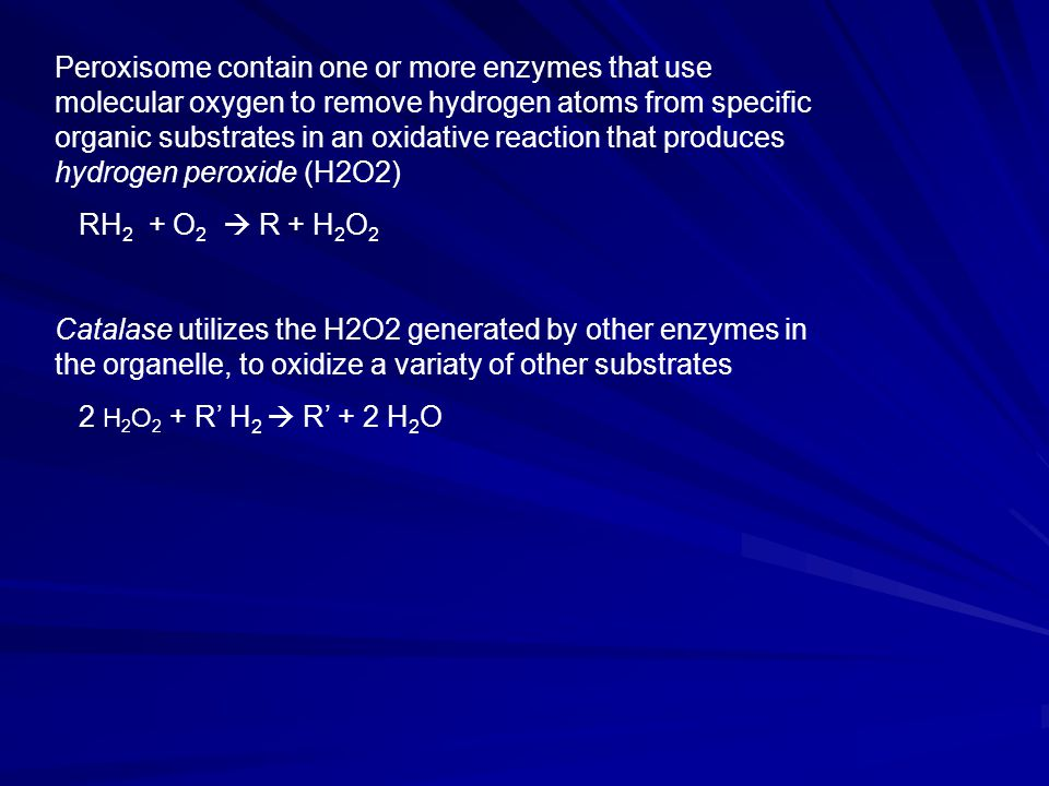 Peroxisome contain one or more enzymes that use molecular oxygen to remove hydrogen atoms from specific organic substrates in an oxidative reaction that produces hydrogen peroxide (H2O2)