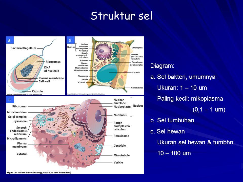 Struktur sel Diagram: a. Sel bakteri, umumnya Ukuran: 1 – 10 um