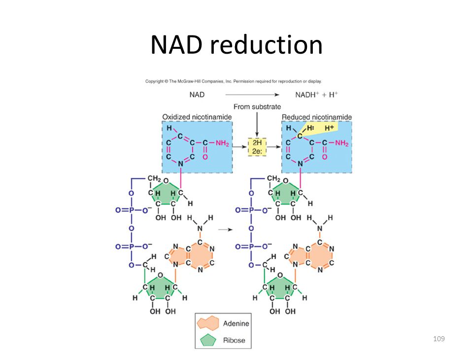 NAD reduction