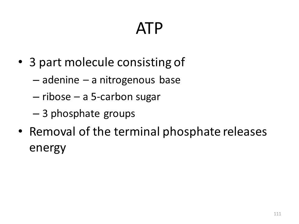 ATP 3 part molecule consisting of