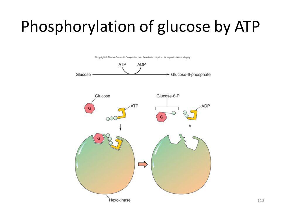 Phosphorylation of glucose by ATP